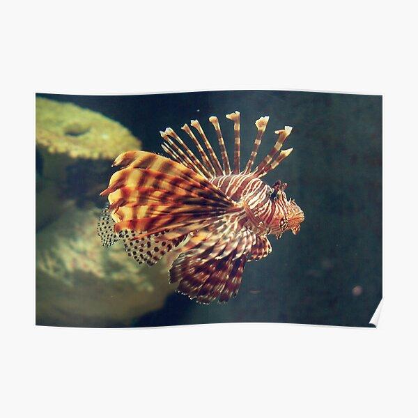 Fish at Melbourne Aquarium, Victoria Poster