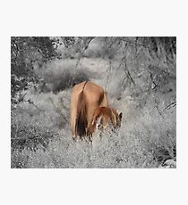 Red Dun Mare and Young Foal Photographic Print