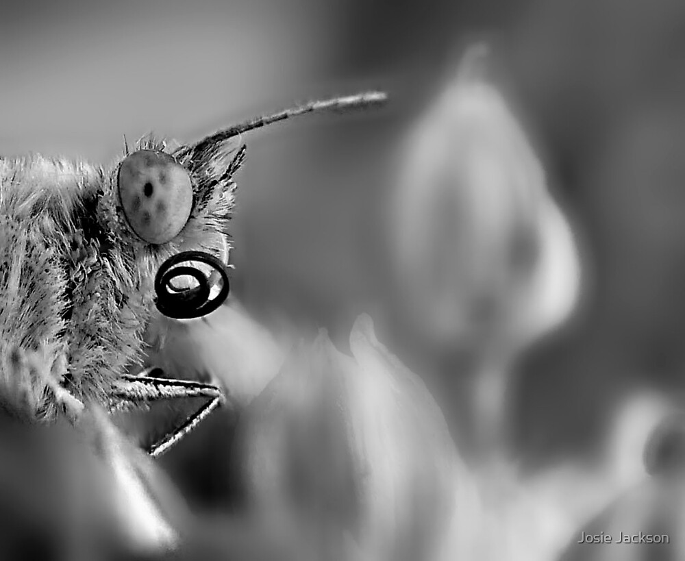 Close-up of my butterfly by Josie Jackson