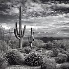 The Sonoran Desert in Black and White  by Saija  Lehtonen