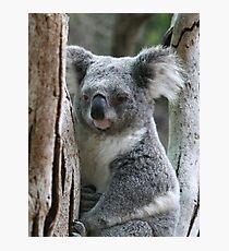 Aussie Icon Photographic Print