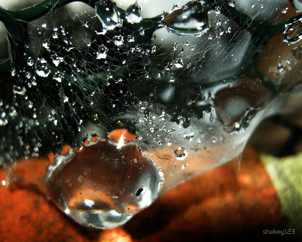 Water caught in a cobweb by shakey123