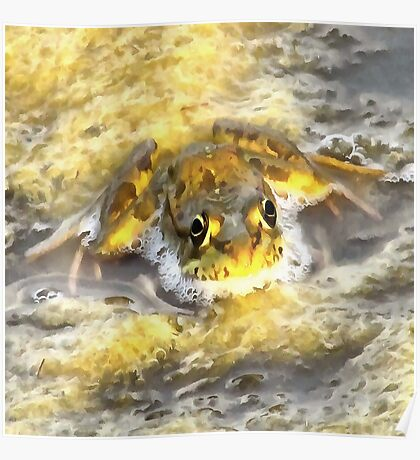 Frog In Deep Water Poster