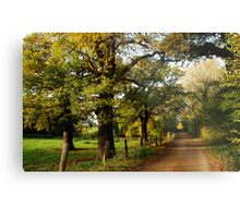 Quot An Old Country Road With Oaktrees Quot By Jchanders Redbubble
