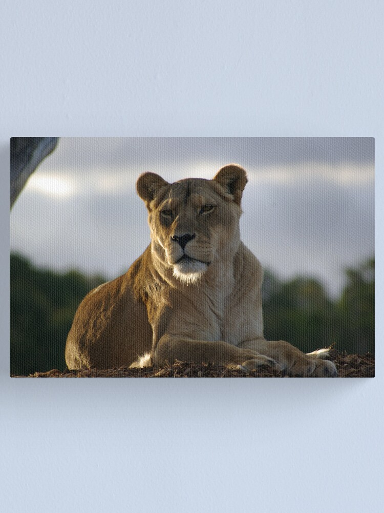 Alternate view of The Lioness Canvas Print