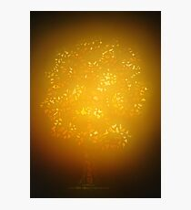 Illuminating Royal Oak Photographic Print