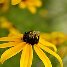 yellow attracts yellow by Aimelle