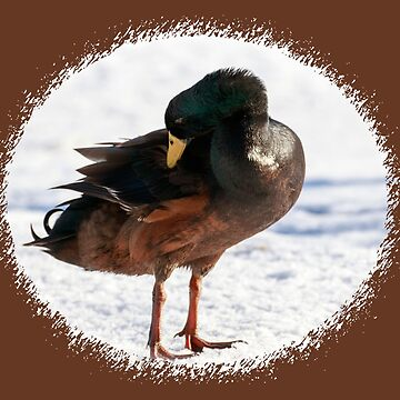 Running duck in the snow by anatida