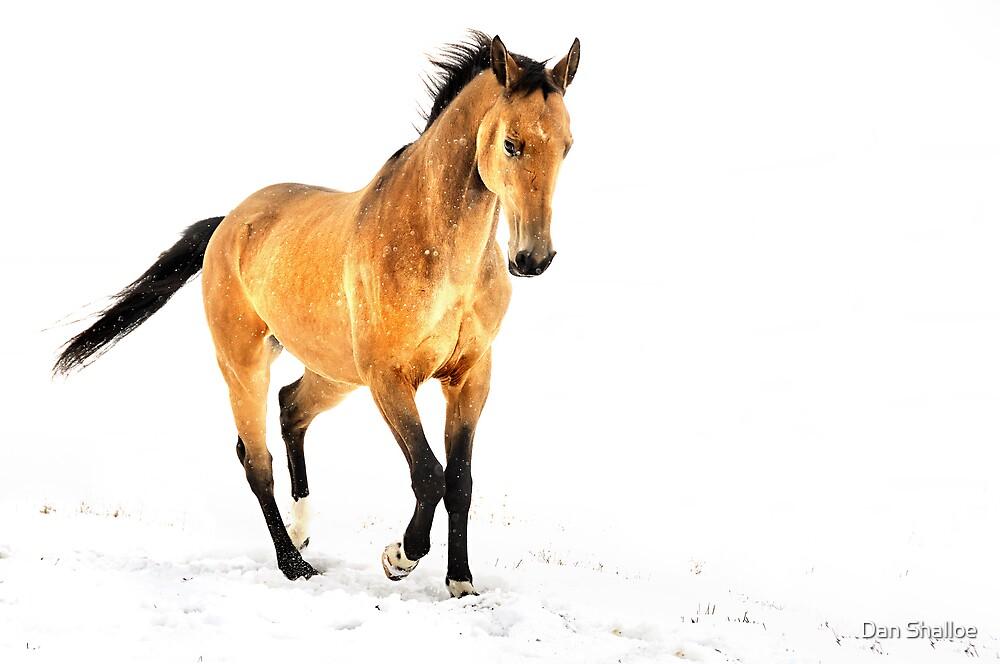 winter is golden by Dan Shalloe