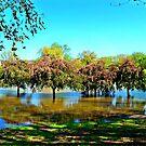 Overwatered Cherry Blossoms by Cheri Sundra