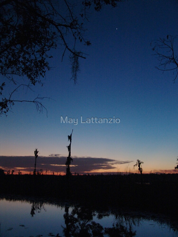 When you wish upon a star... by May Lattanzio