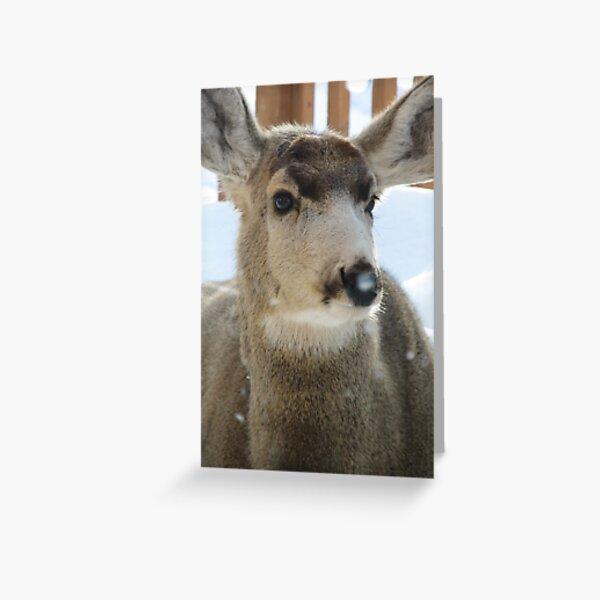 Animals: Mule Deer  Greeting Card