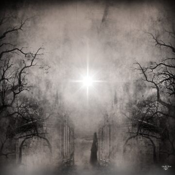 Follow The Light by Spyder