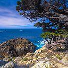 Big Sur Point Lobos State Park, Point Lobos by photosbyflood