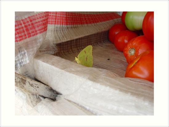 The Tomato Vendor - Common Sulphur Butterfly by May Lattanzio