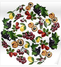 Set hand draw colored sketch with fruits, berries and leaves. Poster