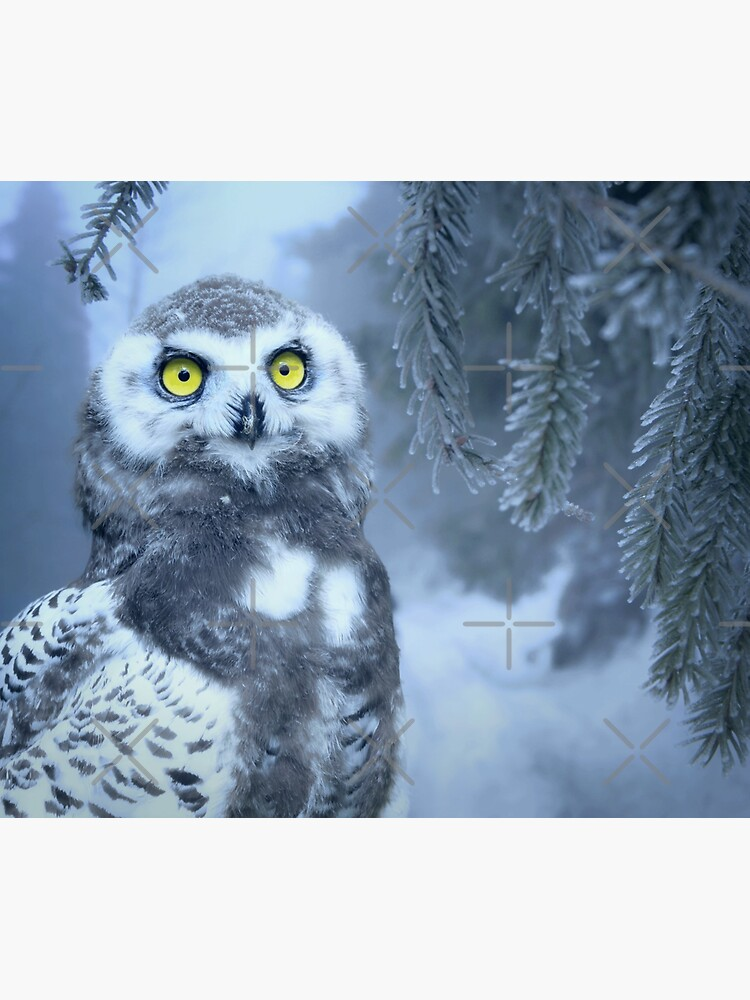 Snowy Owl Forest Bird Yellow Eyes Photo-realistic Wildlife Print by thespottydogg
