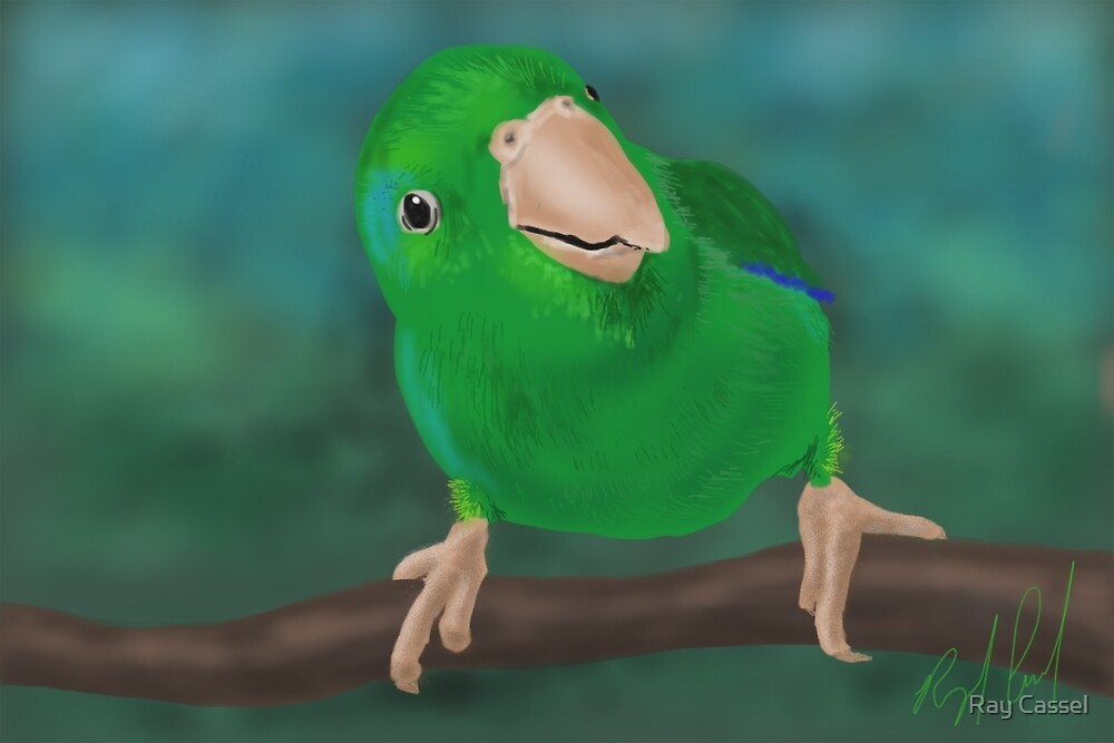 Closer Look (Pacific Parrotlet) - iPad Illustration by Ray Cassel