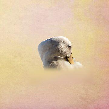 Indian Runner duck by anatida