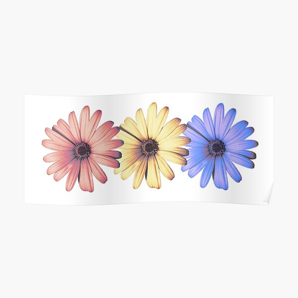 Daisies primary colors Poster