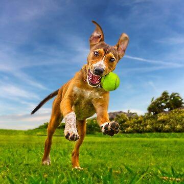 I'm having a ball.  by alex4444