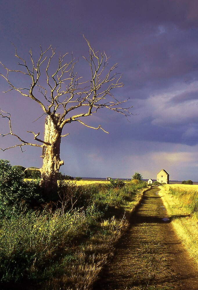 Track to St Peter On The Wall, Bradwell, Essex England. by Peter Stephenson