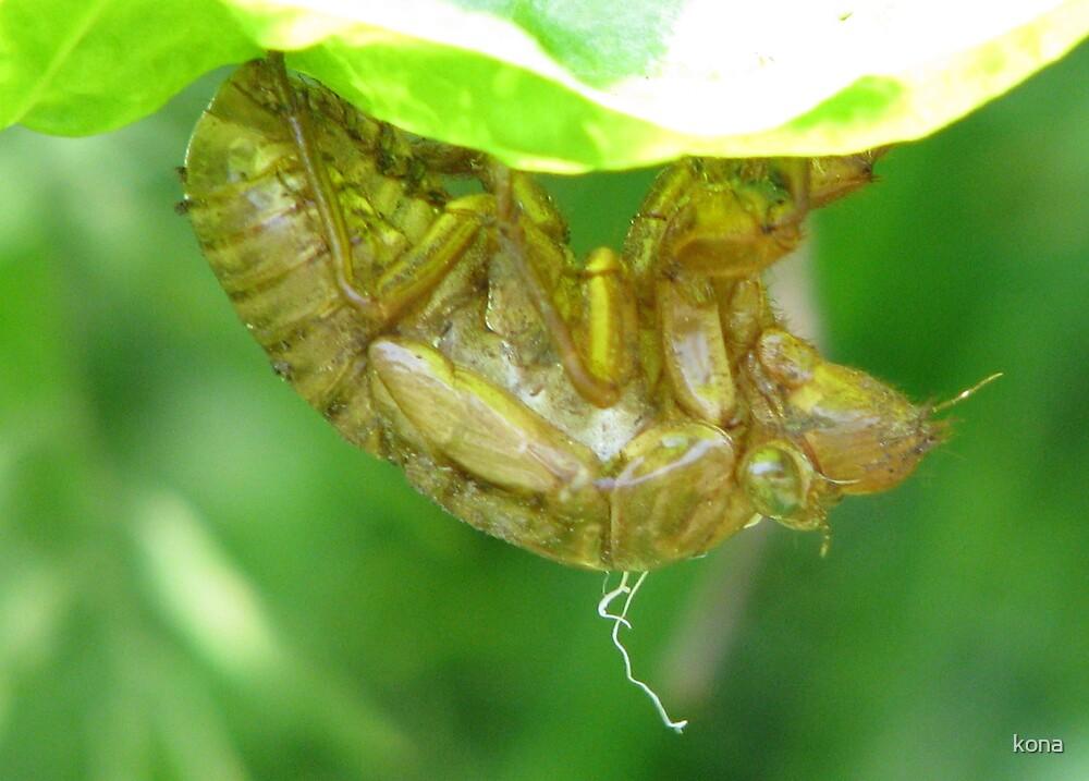 bug by kona