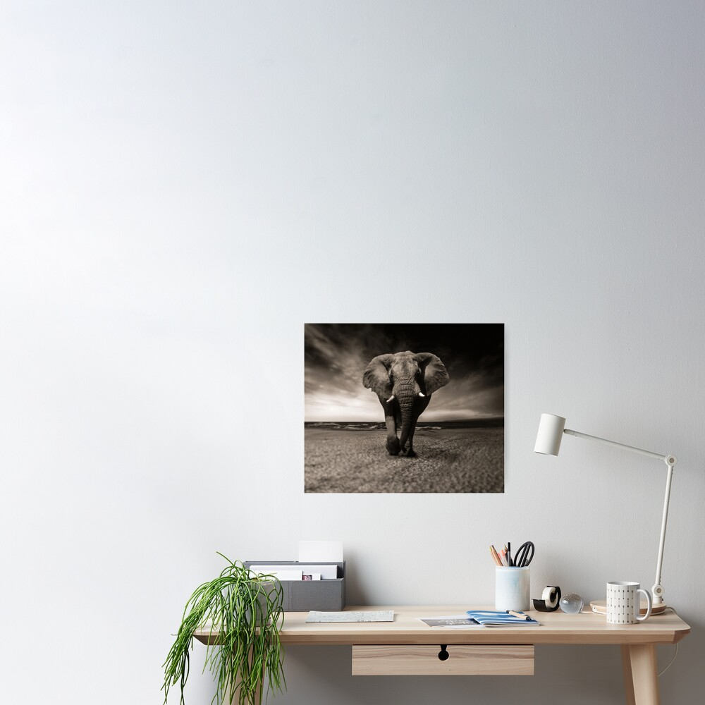 Elephant Black and White Photo-realistic Bull Elephant Print  Poster