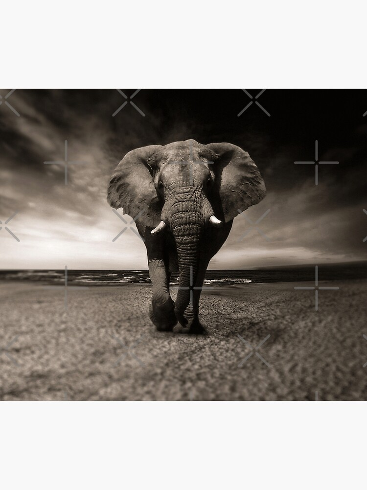 Elephant Black and White Photo-realistic Bull Elephant Print  by thespottydogg