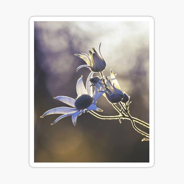Woodland Wildflowers Sticker