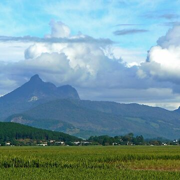 Mt Warning over the Canefields by grmahyde
