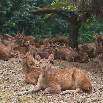 Doe a Deer  by wildlifestyleco
