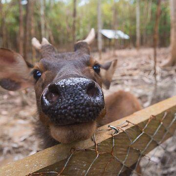 Puppy Dog Eyed Deer aww! by wildlifestyleco