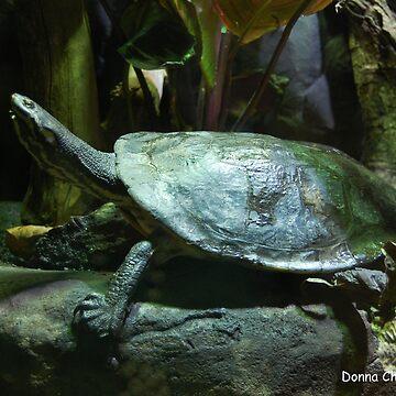 Tortoise by donnachapman