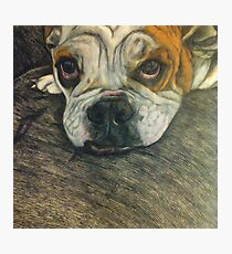 Hey Bulldog Photographic Print