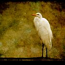 Great Egret Portrait by Jonicool