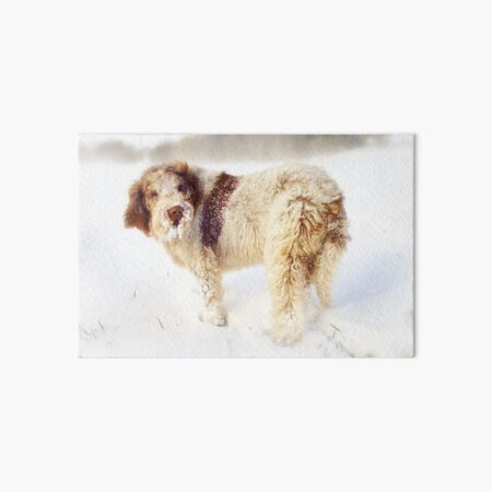 Spinone in a Snow Storm Art Board Print