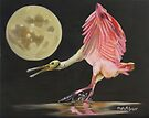 Moon Over Mississippi A Roseate Spoonbills Perspective by Phyllis Beiser