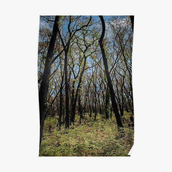 Bushfire regrowth Poster