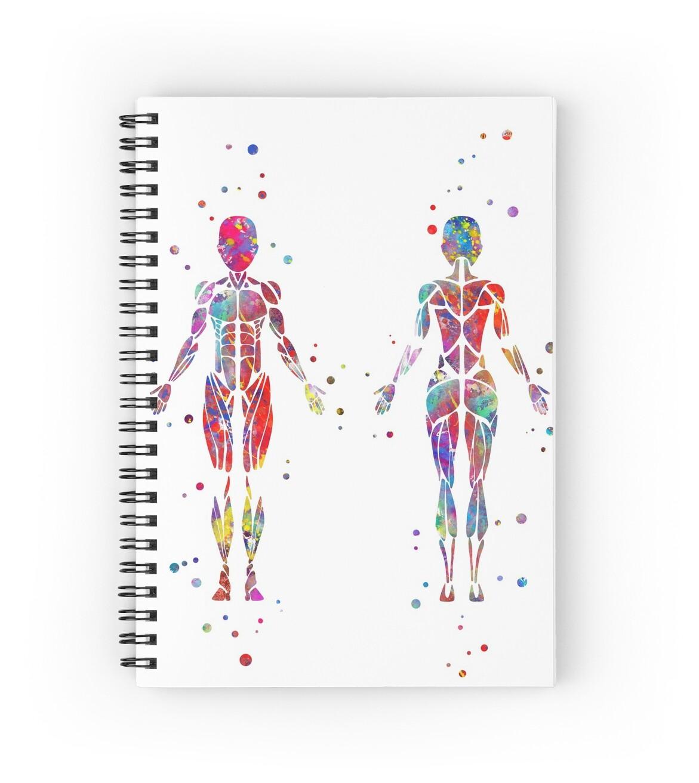 Bonito Grises Anatomía Deutsch Molde - Imágenes de Anatomía Humana ...