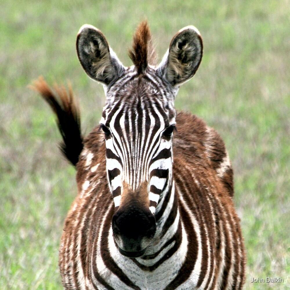Zebra Eyes by John Dalkin