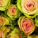 Pink & Green Rose Bouquet by Jessica Manelis