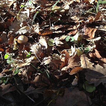 Dead Leaves and Mushrooms by DrFrankenbaum