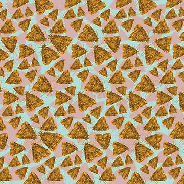 moth pattern by Hallmm