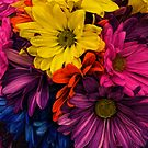 Riot of Color by Jessica Manelis