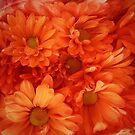 Sweet Orange by Jessica Manelis