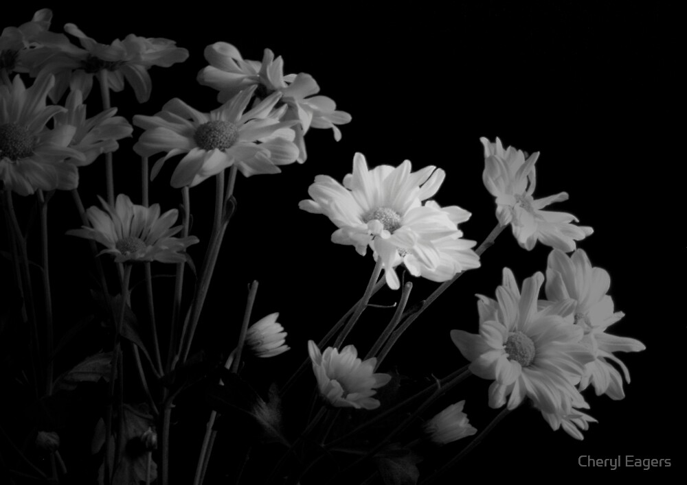Emerging Daisies In Black and White by Cheryl Eagers
