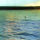 Seagull and Acadia by ionclad