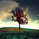 The Red Tree by swin