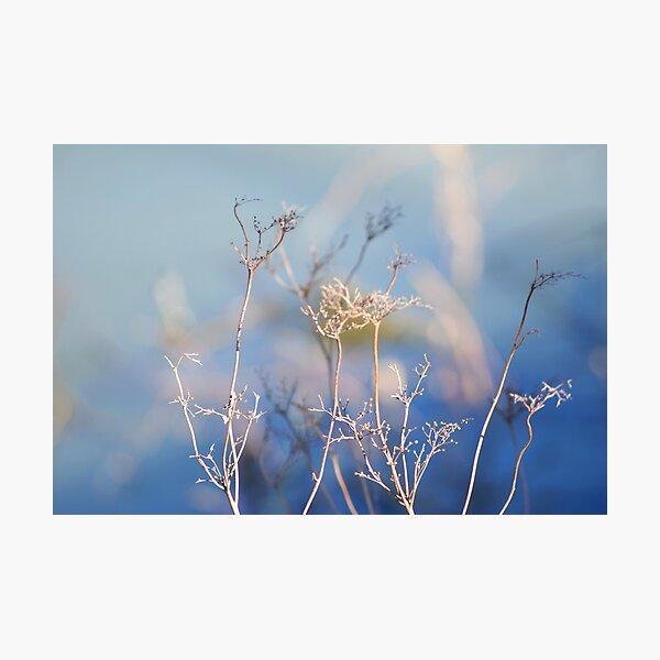 Spring Emerging Photographic Print